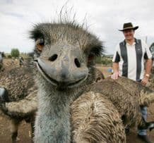 Photo Bomber No'2 'The Ostrich'